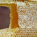 méz, apiterápia