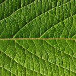 természetes, organikus, táplálékkiegészitők