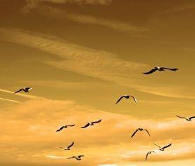 Engedjünk el mindent és maradjunk a Self ürességében – pszichológia, boldogság, öröm, tudat, tudatosság, harag